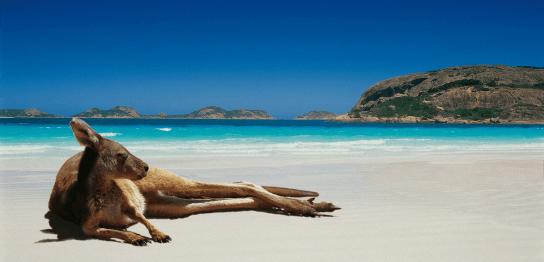 おすすめオーストラリア留学