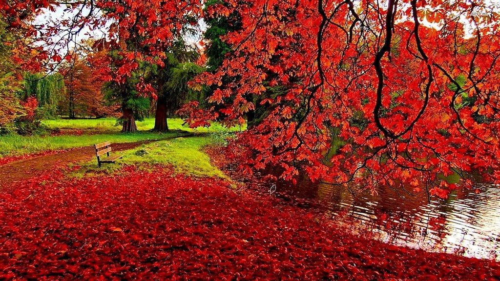 メルボルンの紅葉の美しさは日本に勝るとも劣らない