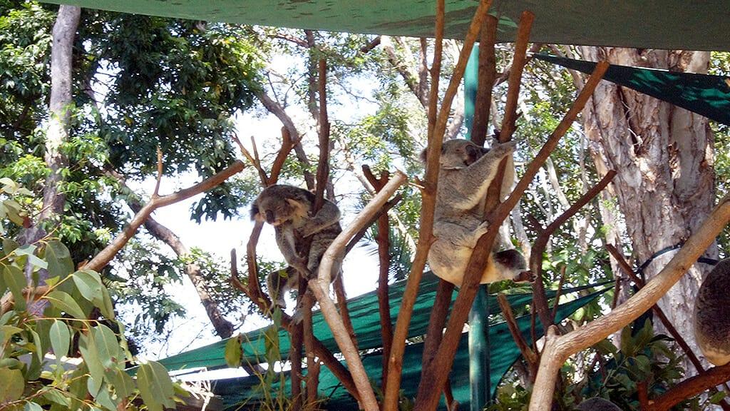 currumbin-zoo