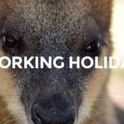 オーストラリアへのワーキングホリデーが大人気の「もう一つの理由」