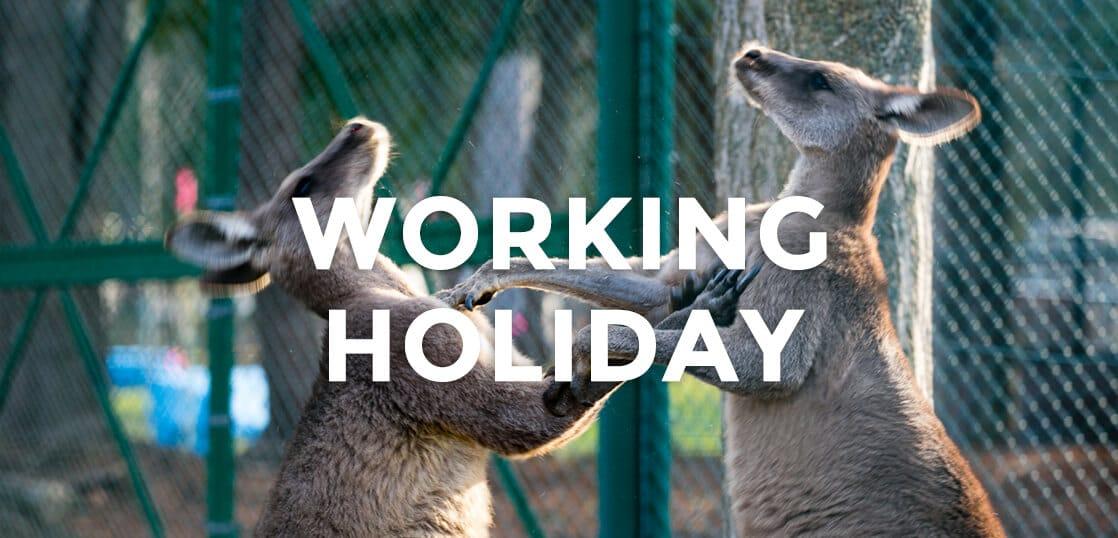 オーストラリアでのワーキングホリデーを楽しみ成功させる第一歩の秘訣
