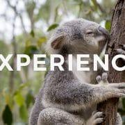 【留学体験談】超おすすめのオーストラリア・ブリスベン留学