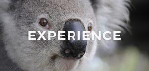 【留学体験談】実のあるワーキングホリデーにするためには?私の実体験から学んだこと