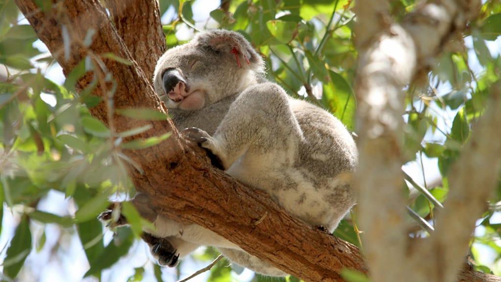 オーストラリアへのワーホリを選んだ理由