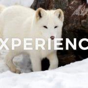 【留学体験談】バンクーバー(カナダ)一年留学体験記