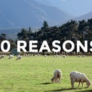 ニュージーランド留学を選ぶ10の理由(生活編)